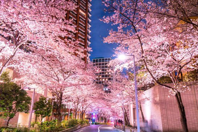 「BLT STEAK 桜まつり」2