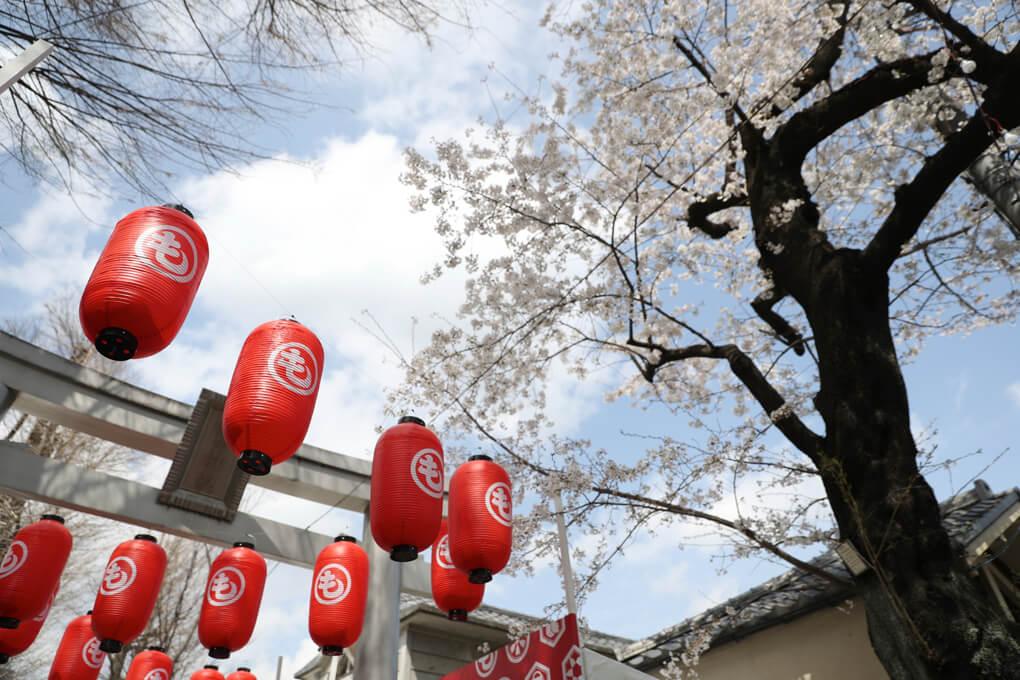 穏田神社 桜 もしもしにっぽん1